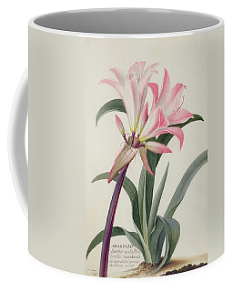 Amaryllis Belladonna, 1761 Coffee Mug