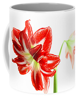 Amaryllis Duet Coffee Mug
