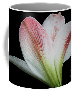 Amaryllis Coffee Mug by Judy Whitton