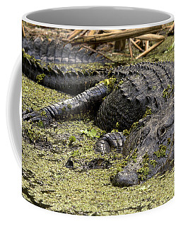 American Alligator Smile Coffee Mug