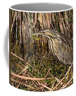 American Bittern Coffee Mug
