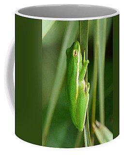 American Green Tree Frog Coffee Mug