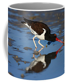 Coffee Mug featuring the photograph American Oystercatcher Mirror by John F Tsumas