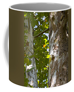 Coffee Mug featuring the photograph American Sycamore by Denise Beverly