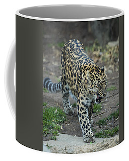 Amur Leopard Coffee Mug by Phil Abrams