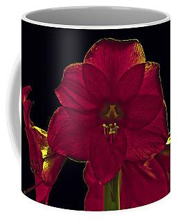 Amyrillis Coffee Mug