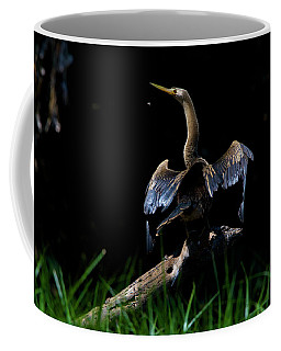 An American Anhinga Sunning On A Fallen Coffee Mug