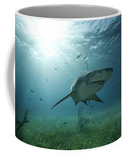 An Underwater Shot Of A Lemon Shark Coffee Mug