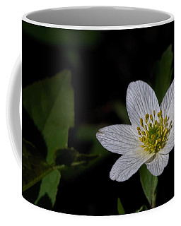 Anemone Nemorosa  By Leif Sohlman Coffee Mug by Leif Sohlman
