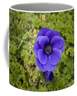 Anemone Coffee Mug by Phil Abrams