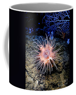 Coffee Mug featuring the photograph Anemone Sea Life Sea Ocean Water Underwater by Paul Fearn