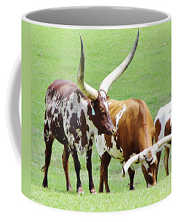 Ankole And Texas Longhorn Cattle Coffee Mug