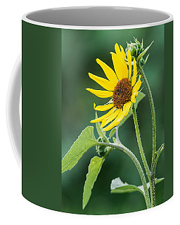 Annual Sunflower Coffee Mug