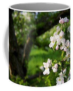 Coffee Mug featuring the photograph Apple Blossoms In The Orchard by Mary Lee Dereske