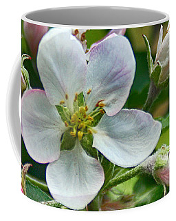 Coffee Mug featuring the photograph Apple Blossom And Buds by William Selander