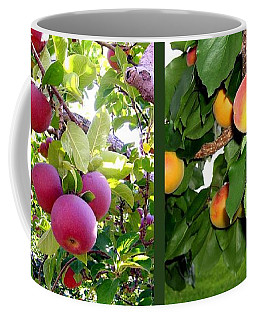 Coffee Mug featuring the photograph Apples And Apricots by Will Borden