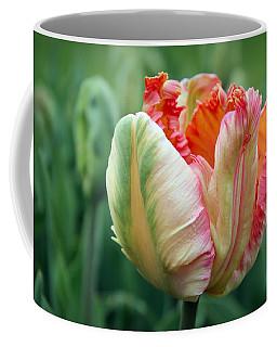 Apricot Parrot Tulip Coffee Mug