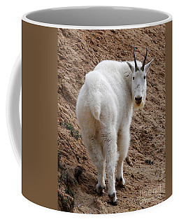 Coffee Mug featuring the photograph Are You Following Me by Vivian Christopher