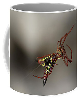 Arrow-shaped Micrathena Spider Starting A Web Coffee Mug