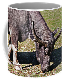 Asian Water Buffalo  Coffee Mug by Miroslava Jurcik