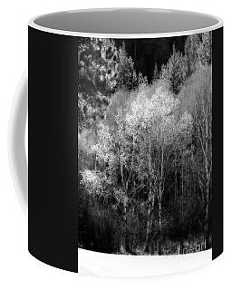 Aspens In Morning Light Bw Coffee Mug