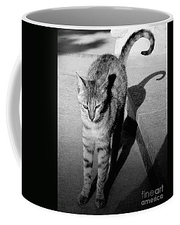 Aswan Cat Coffee Mug