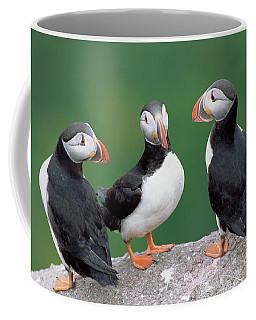 Atlantic Puffin Trio Coffee Mug