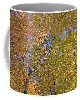 Autumn Color Maple Tree Canopy, Mille Coffee Mug