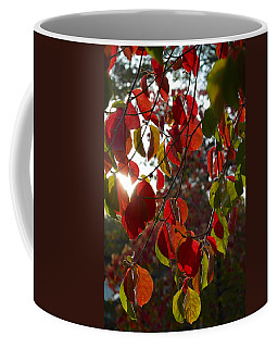 Autumn Dogwood In Evening Light Coffee Mug