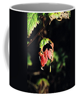 Coffee Mug featuring the photograph Autumn Leaf by Cathy Mahnke