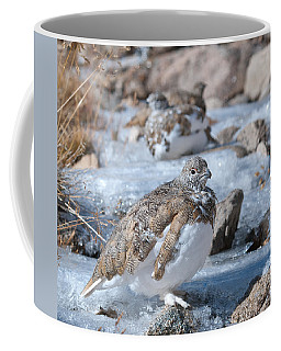 Coffee Mug featuring the photograph Autumn Plumage White-tailed Ptarmigan by Cascade Colors