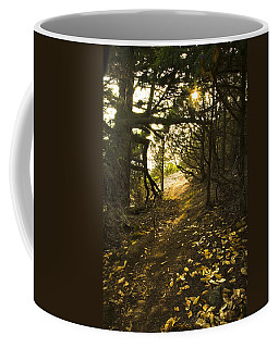 Coffee Mug featuring the photograph Autumn Trail In Woods by Yulia Kazansky
