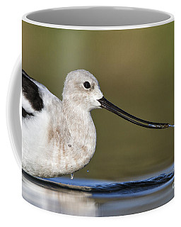 Avocet Feeding Coffee Mug