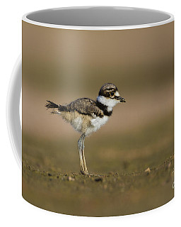 Baby Killdeer Coffee Mug