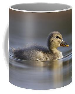 Coffee Mug featuring the photograph Baby Mallard by Bryan Keil