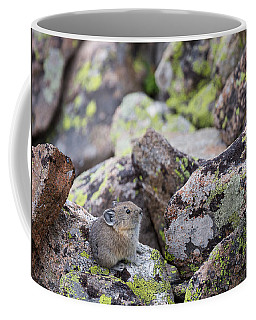Coffee Mug featuring the photograph Baby Pika by Michael Chatt