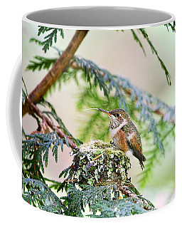 Coffee Mug featuring the photograph Baby Rufous Hummingbird by Peggy Collins