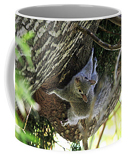 Coffee Mug featuring the photograph Baby Squirrel On The Loose by Trina  Ansel