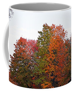 Coffee Mug featuring the photograph Backyard Trees by Judy Wolinsky