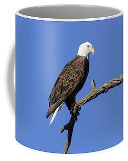 Bald Eagle 4 Coffee Mug