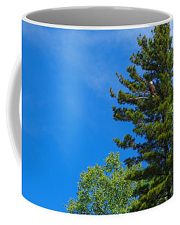 Coffee Mug featuring the photograph Bald Eagle In Tree by Lars Lentz