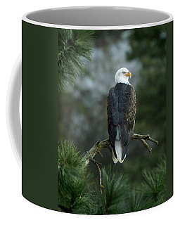 Bald Eagle In Tree Coffee Mug