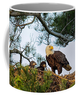 Bald Eagle With Eaglets  Coffee Mug by Everet Regal