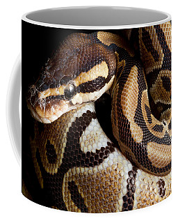 Ball Python Python Regius Coffee Mug