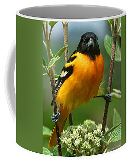 Baltimore Oriole Coffee Mug