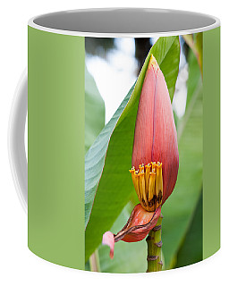 Coffee Mug featuring the photograph Banana Flower Closeup by Dan McManus