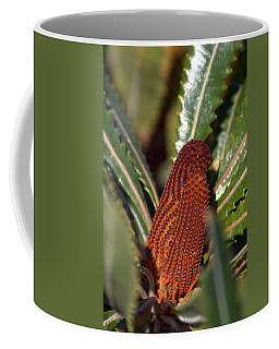 Coffee Mug featuring the photograph Banksia by Miroslava Jurcik