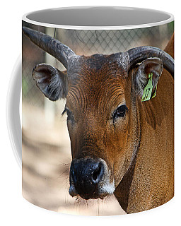 Banteng Girl Coffee Mug by Miroslava Jurcik