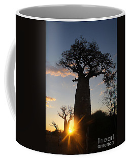 baobab from Madagascar 6 Coffee Mug