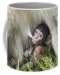 Barbary Macaque Nursing Coffee Mug